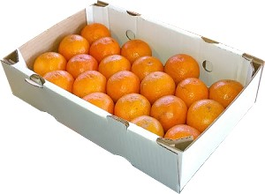 1 Tray - Page Oranges