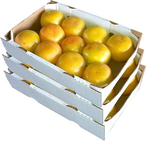 3 Trays - Ruby Red Grapefruit with...