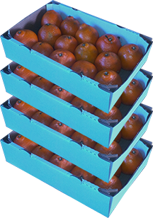4 Trays - Honeybells with...